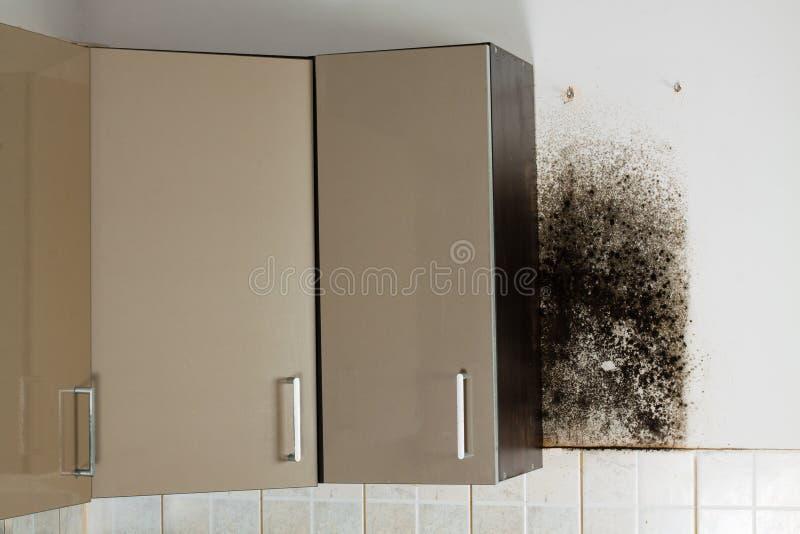 Black mould. stock photos