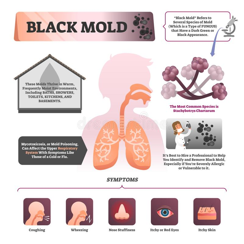 Black mold vector illustration. Labeled symptom and description infographic. Black mold vector illustration. Labeled symptoms and description infographic vector illustration