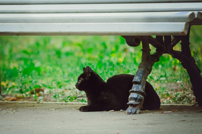 A black, mongrel cat sits on the street under a bench. Close-up royalty free stock images