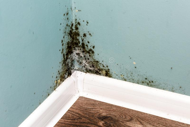 Black mould on wall closeup. House cleaning concept stock images