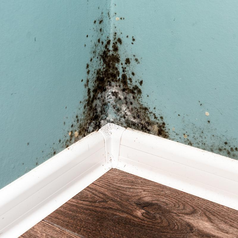 Black mould on wall closeup. House cleaning concept stock image