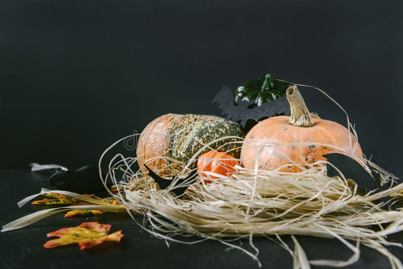 Black mouse and bats on a background of red pumpkins on hay on a black background, autumn harvest, fresh vegetables, Halloween stock photography