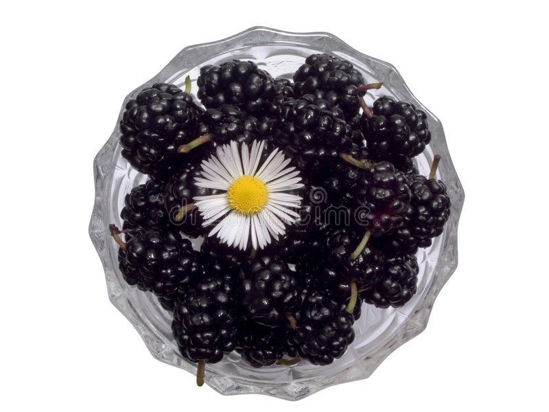 Black mulberries 2 stock photo