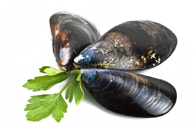 Download Black mussels stock photo. Image of exquisite, mediterranean - 25304142