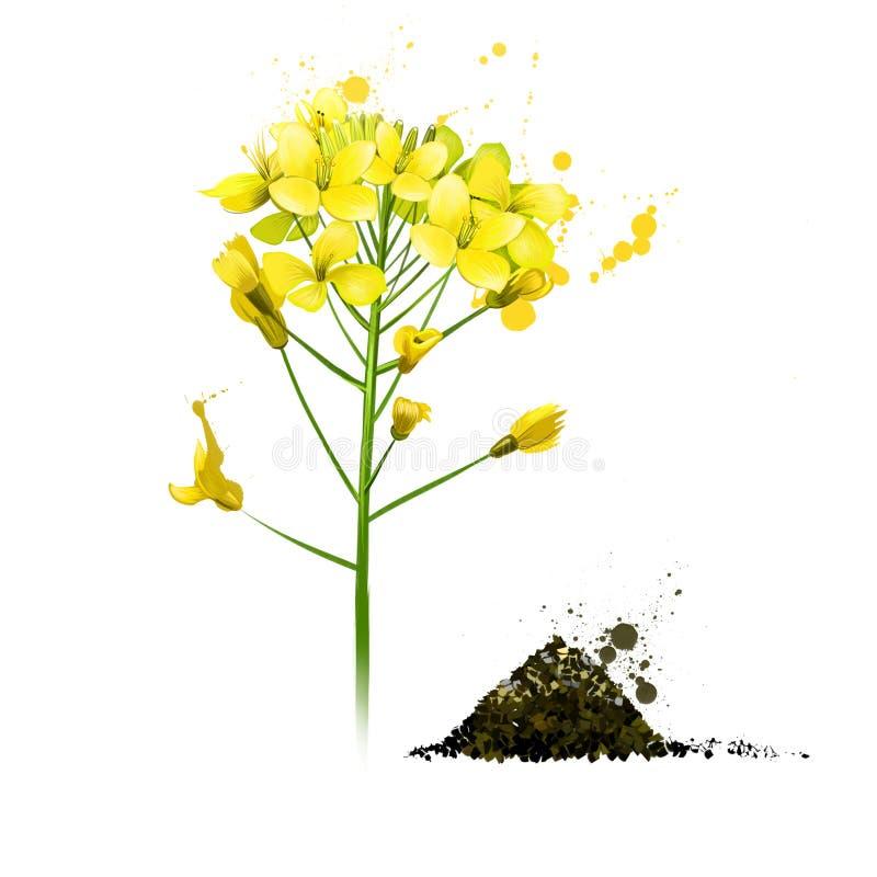 Free Black Mustard Yellow Plant. Brassica Nigra Stock Photo - 162055930