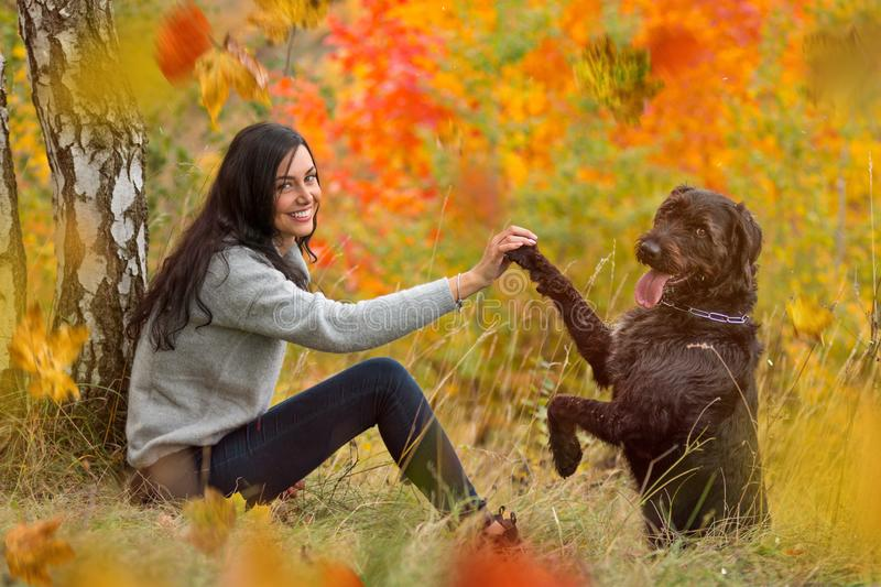 Black mutt dog posing in autumn park. stock photos