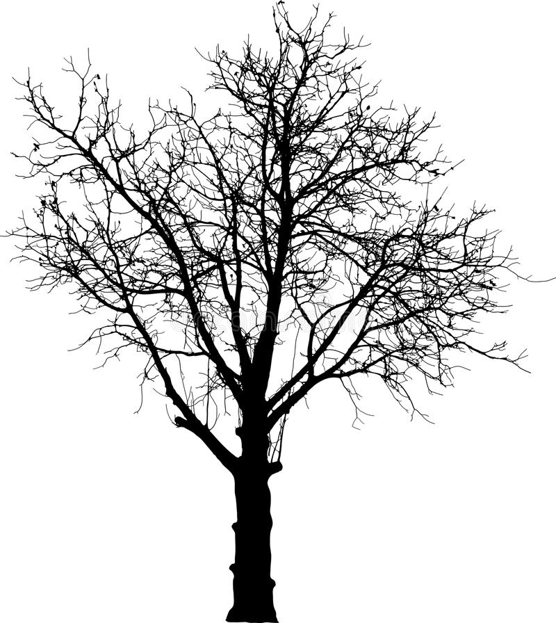 Download Black naked tree stock vector. Illustration of single - 15006737