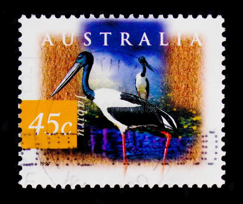 Black-necked Stork - Jabiru Ephippiorhynchus asiaticus, Flora and fauna serie, circa 1997 royalty free stock images