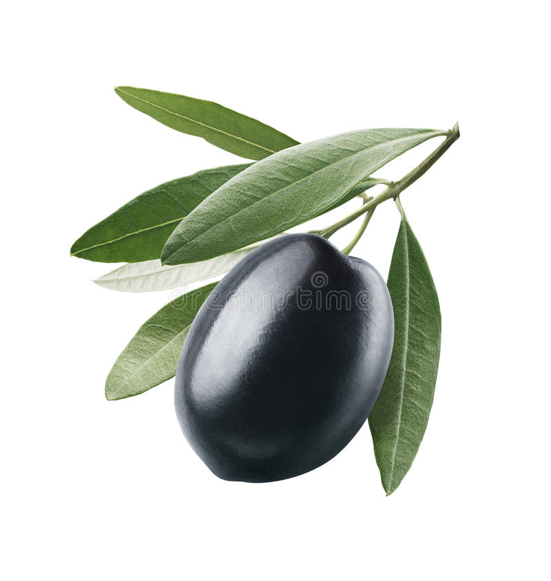Black olive with leaves isolated on white background. As oil package design element royalty free stock image