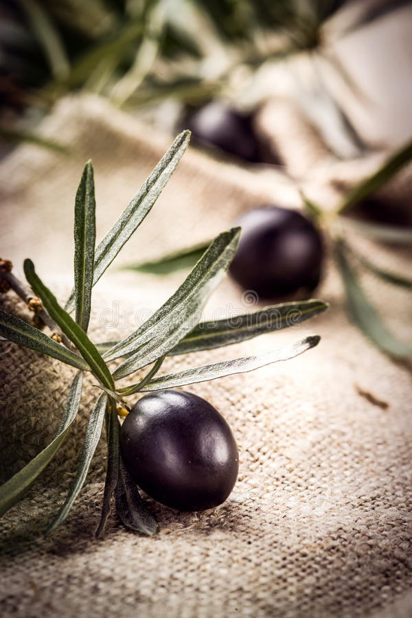 Black olive with leaves. Organic food royalty free stock images