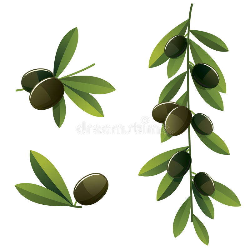 Download Black olive set stock vector. Image of food, crop, freshness - 25562332
