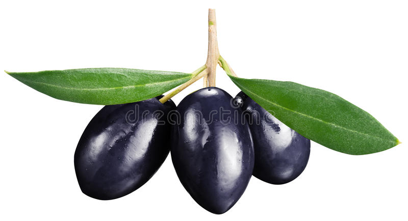 Black olives with leaves on a white background. File contains clipping paths stock image