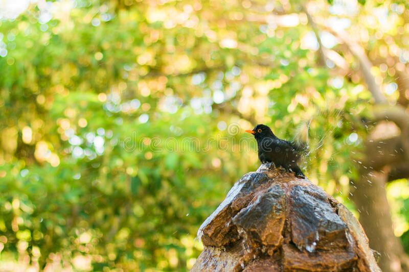 Black and Orange Bird on Brown and Black Tree Log stock images