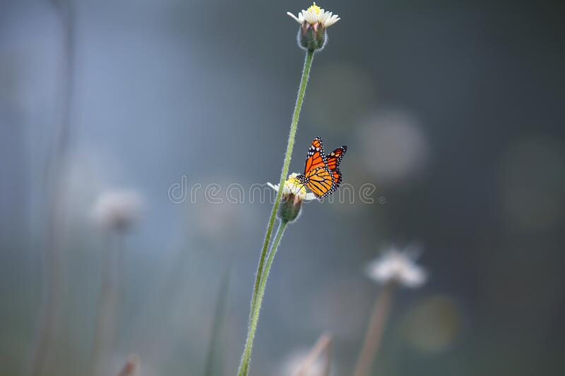Black and Orange Butterfly on White Petal Flower stock photos