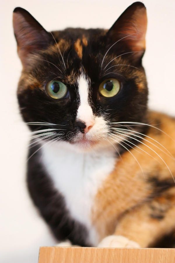 Download Black and orange cat stock photo. Image of camera, fluffy - 13287482