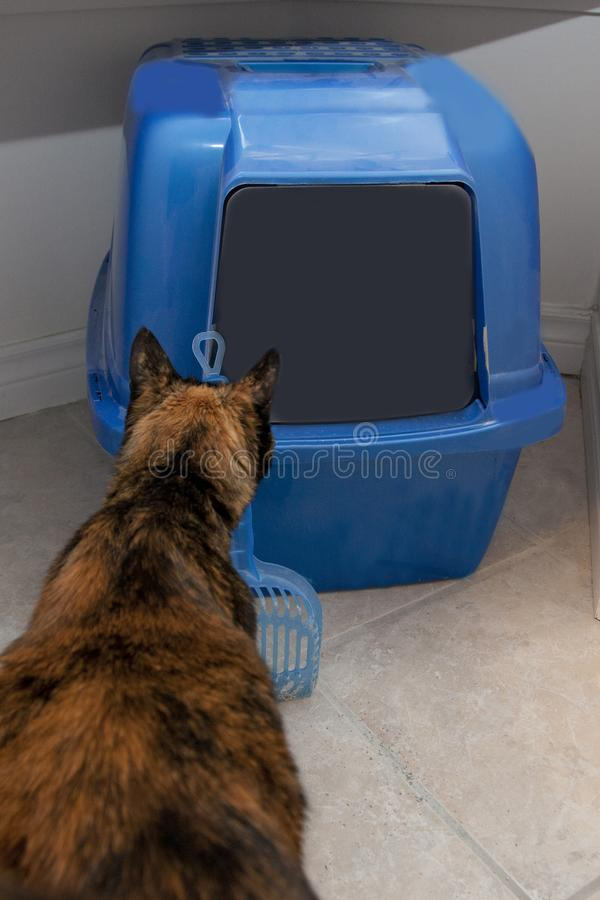 A cat considers the litter box royalty free stock photos