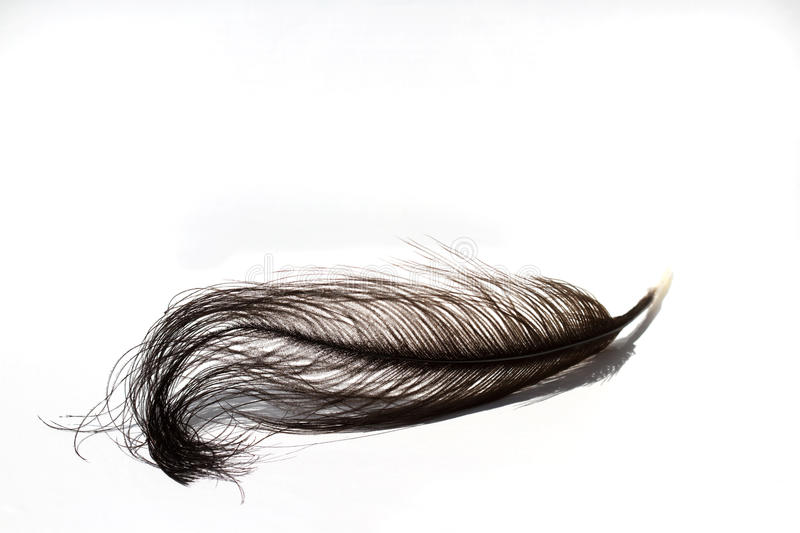 Black ostrich feather isolated on white background royalty free stock photos
