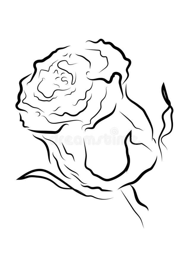 Black outline rose with different stroke effects. Black outline rose with different stroke effects and shapes vector illustration