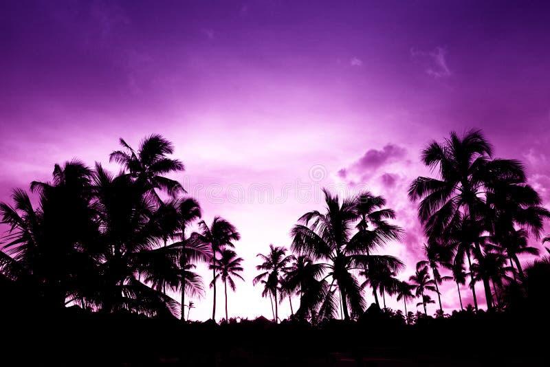 Black palm on night beach royalty free stock photography