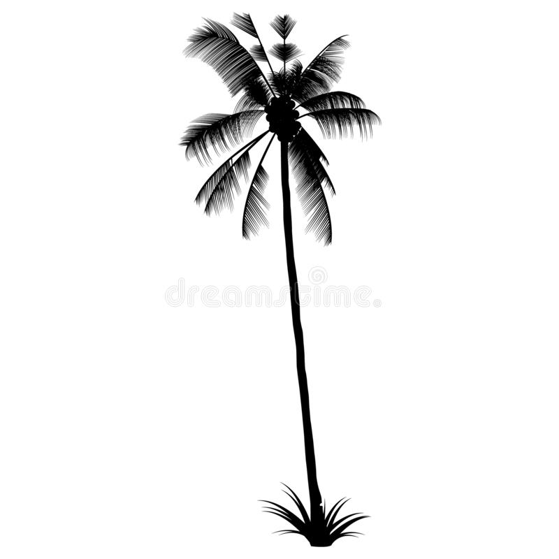 The Black Palm silhouette. Exotic Tropical tree. royalty free stock image