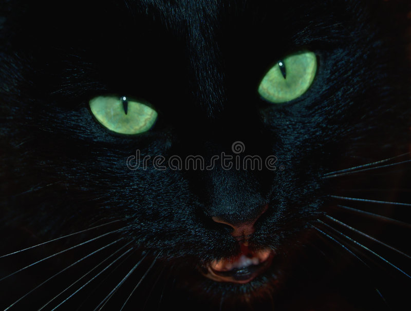 Black Panther royalty free stock photography
