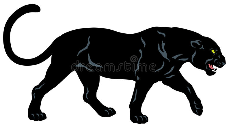 Black panther. Side view image isolated on white background