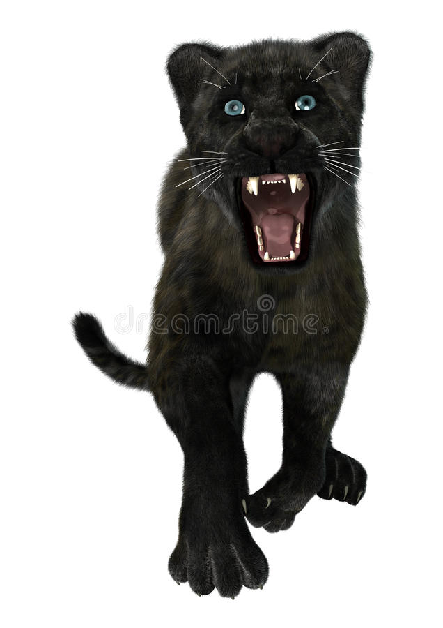 black panther stock photo image 49865014