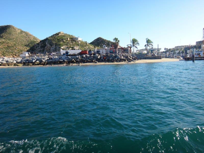 Black Pelicans of Cabo San Lucas, Baja California, Mexico. View of Cabo San Lucas, Baja California, Mexico stock photo