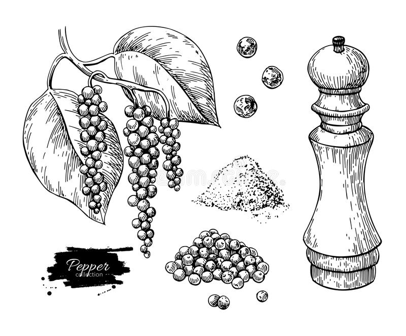 Black pepper vector drawing set. Peppercorn heap, mill, dryed seed, plant, grounded powder. royalty free illustration