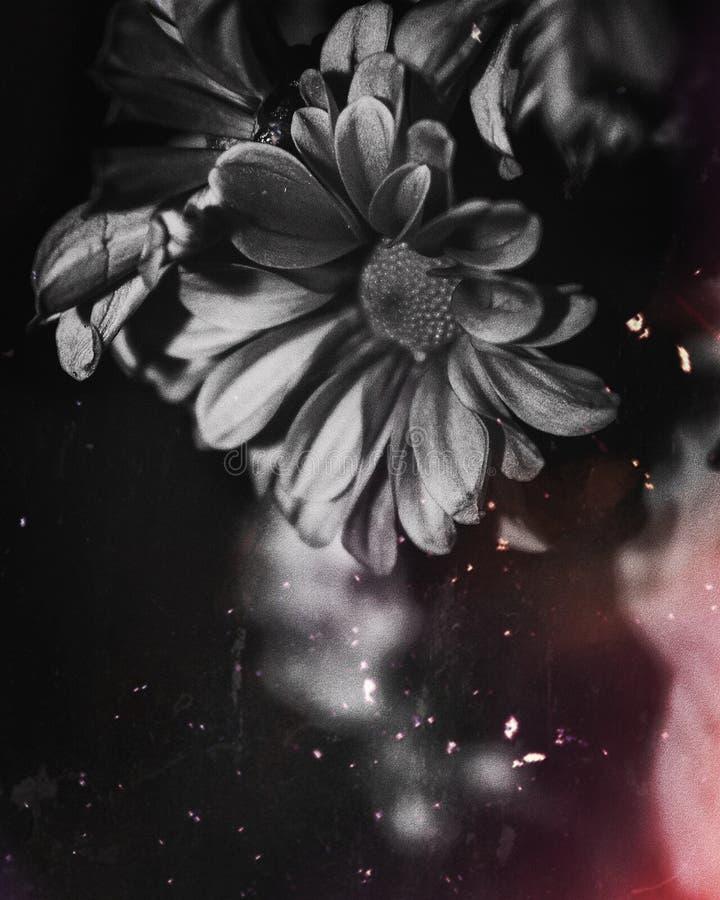 Black Petal Flower Free Public Domain Cc0 Image