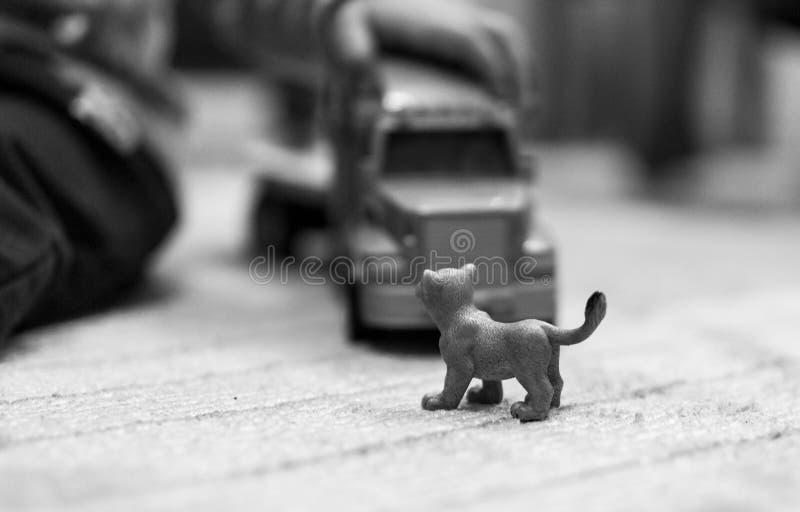 Black, Photograph, Black And White, Mammal royalty free stock photos
