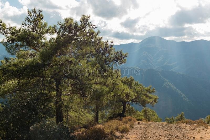 Black pines by a small gravel road at Troodos mountains, Cyprus royalty free stock images