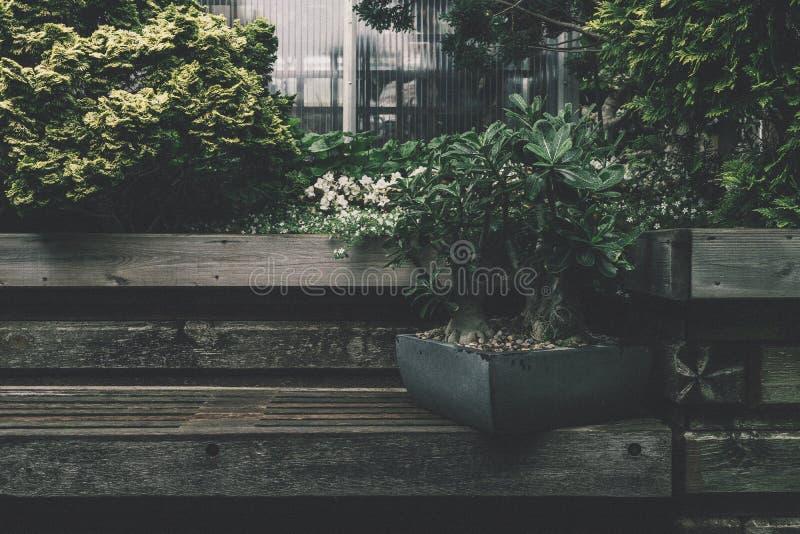 Black Plant Box On Bench Free Public Domain Cc0 Image