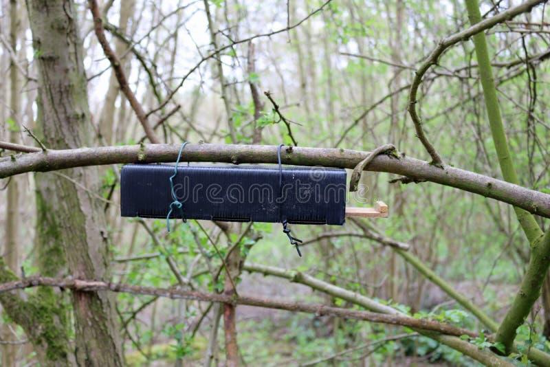 Dormouse nest tube survey box royalty free stock photo