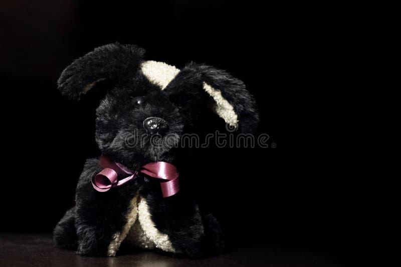 Black plush toy dog on a black background. Copy space stock photography