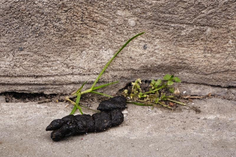 Black poop on the pavement. the need to clean up after animals, dirt on the streets of the city. uncultured and ill-mannered. Black poop on the pavement. need to royalty free stock images