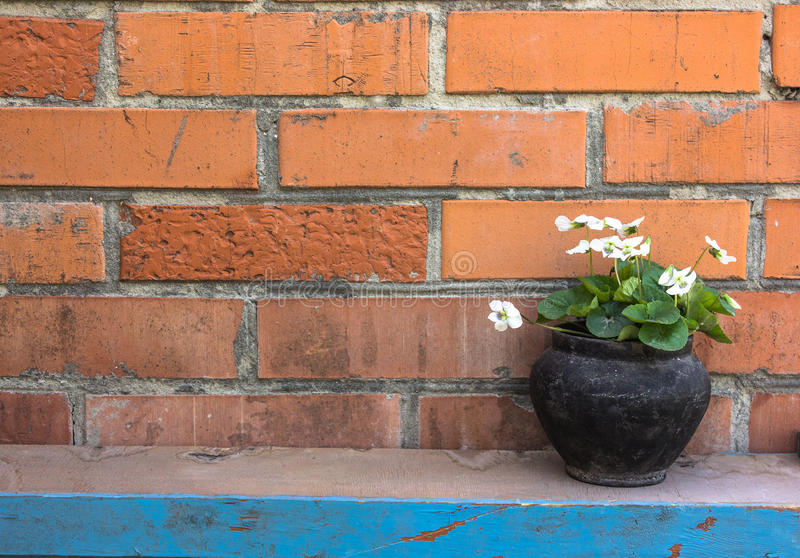 Black pot with white flowers on a brick wall background stock photography
