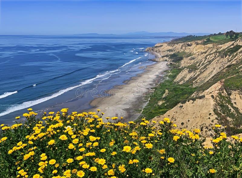 Black' praia com flores, San Diego de s fotografia de stock royalty free