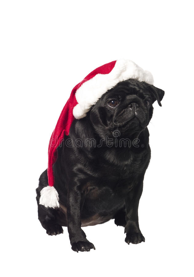 Black pug with a santa hat royalty free stock photography