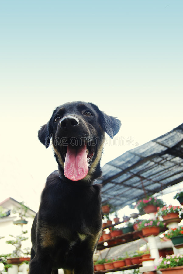 Download A black puppy stock image. Image of furry, comical, animal - 6117167