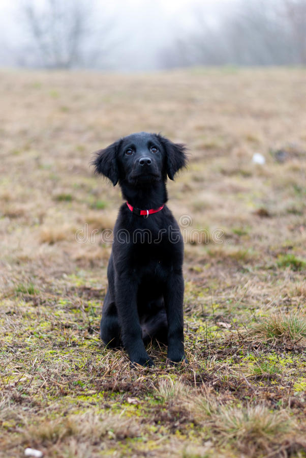 Black puppy stock photo