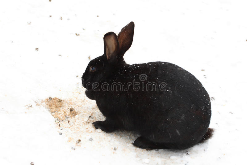 Download Black rabbit. stock image. Image of color, season, bunny - 12364699