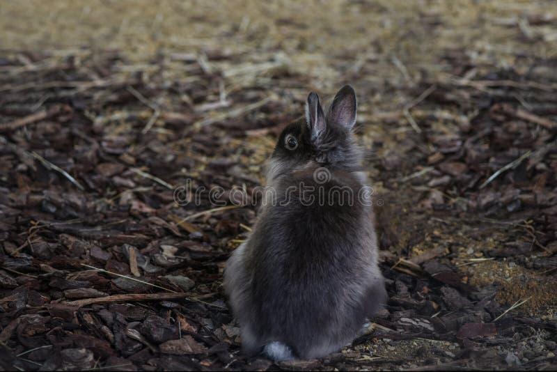 Black rabbit sitting back om natural background. stock photo