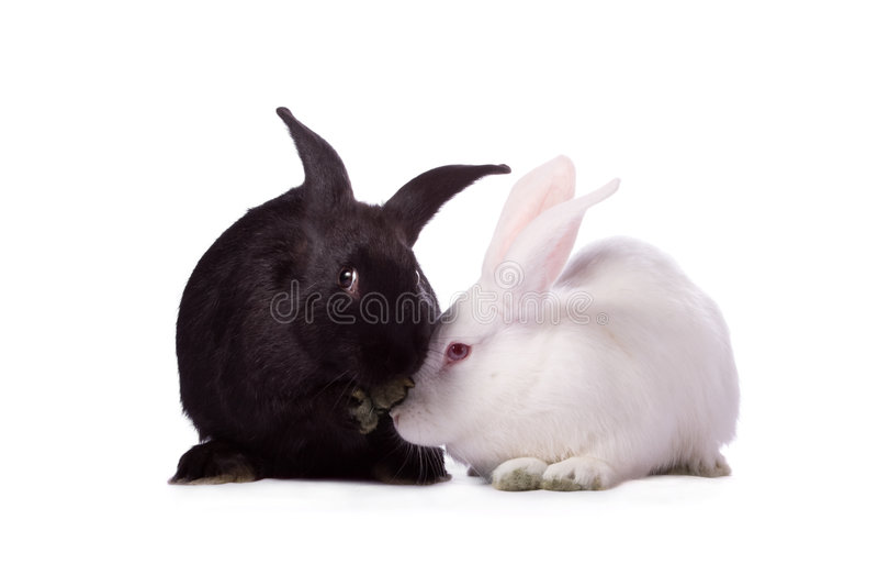 Black rabbit and white rabbit. Isolated on white background stock image