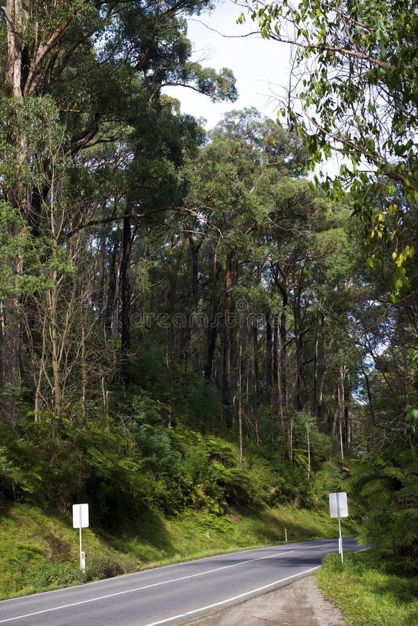 Black Range Forest royalty free stock images