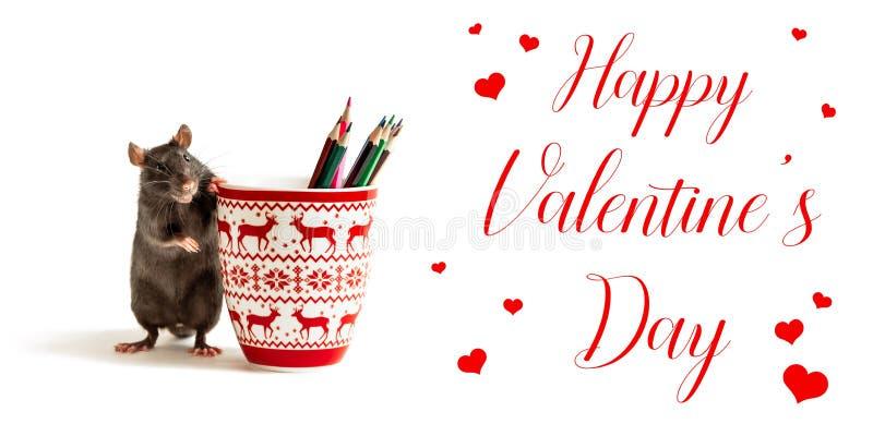 valentine rat stock photos  download 177 royalty free photos