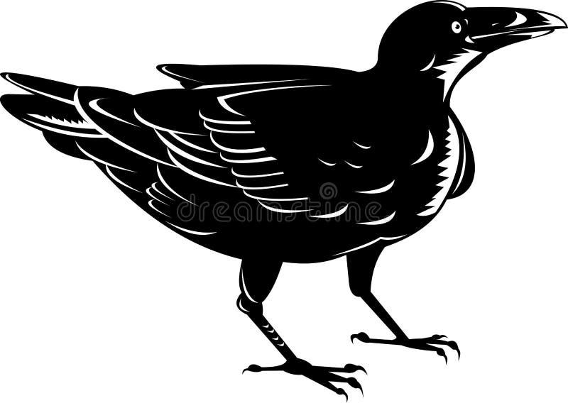 Black raven bird vector illustration