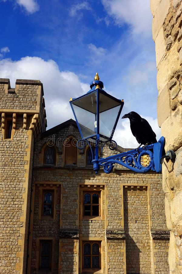 Black Raven of the Tower of London with Waterloo Block Pictured Behind. One of the famous black ravens that ree on the grounds of the Tower of London perched on royalty free stock photo