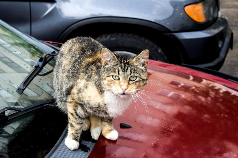 Black red cat is sitting on the car royalty free stock image