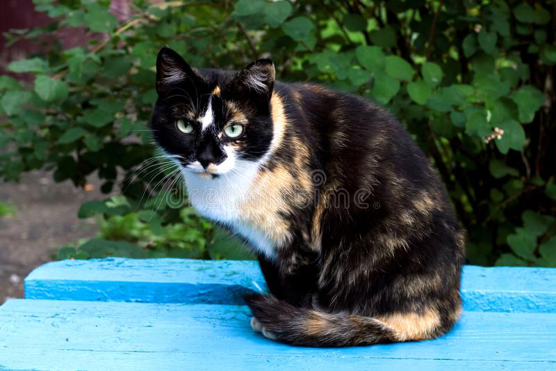 Black red cat sitting on a blue bench stock images